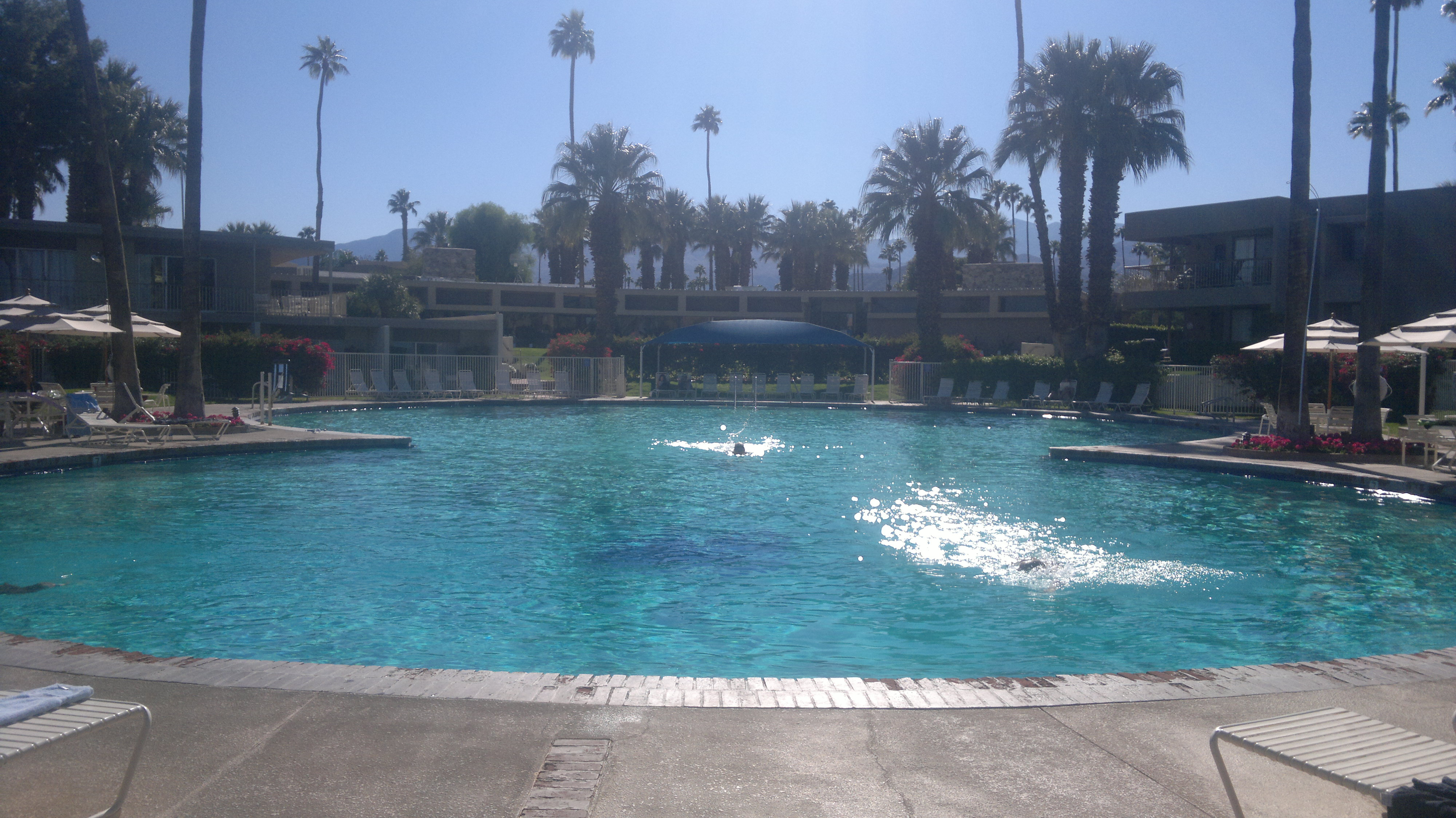 the shadow mountain resort main swimming pool, palm desert - the